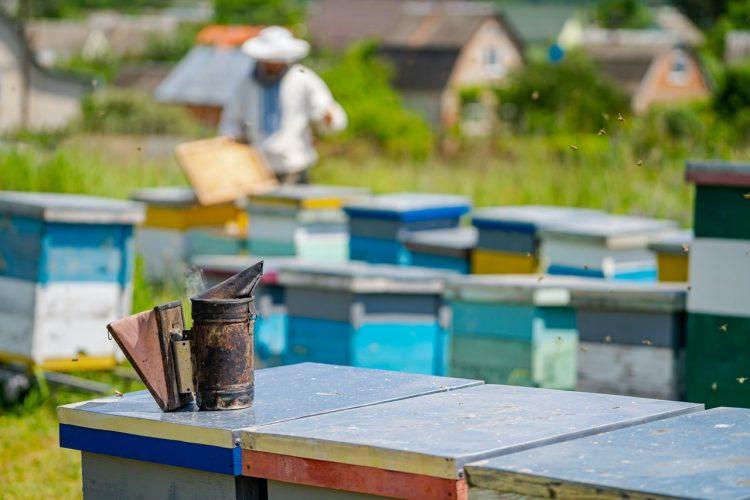 Les différentes catégories de miel : guide des différents types et leurs bienfaits